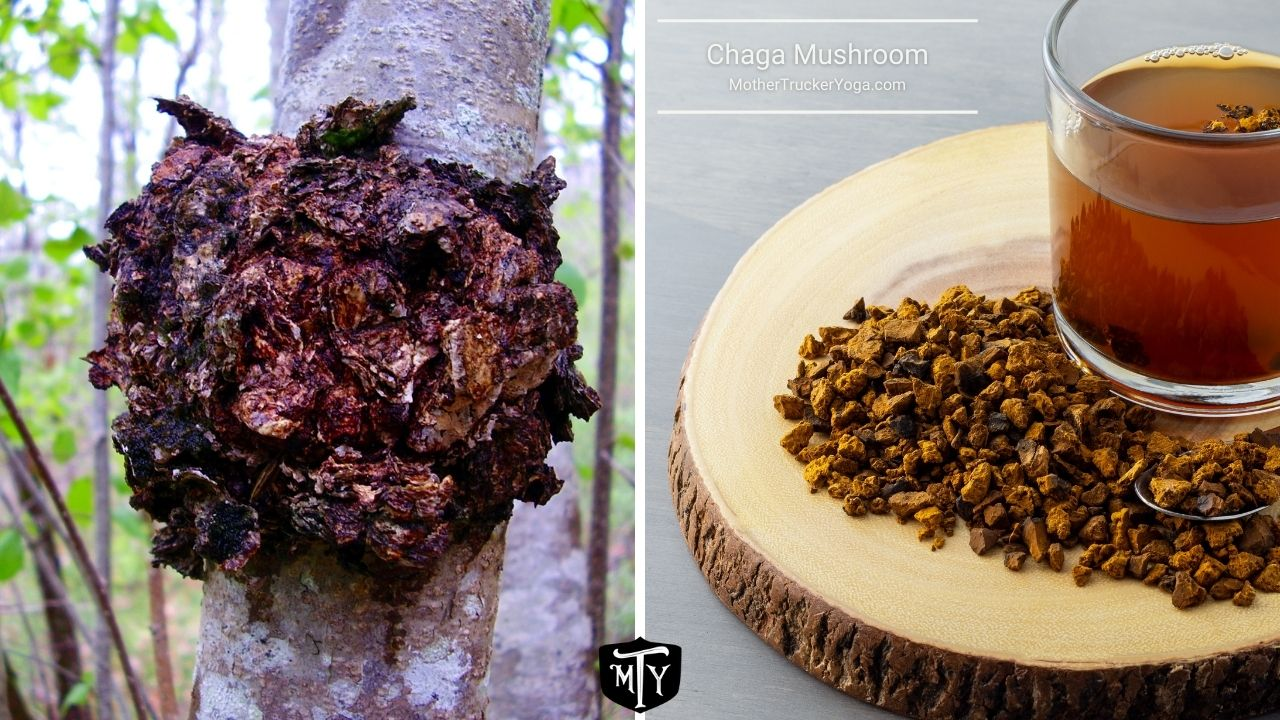 Chaga Mushroom Mother Trucker yoga Blog