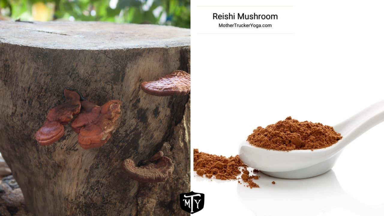 Reishi Mushroom Mother Trucker Yoga Blog